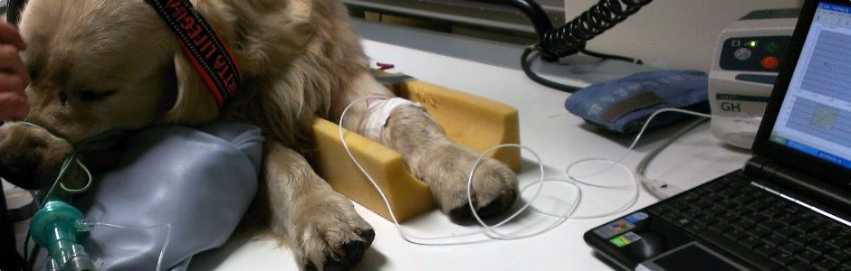 img-ISVRA-sito-nuovo-dog-x-ray.jpg